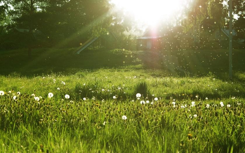6. Dandelion's Meadow.jpg